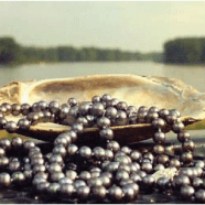 Freshwater Pearls History
