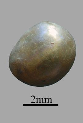Pearl 2mm