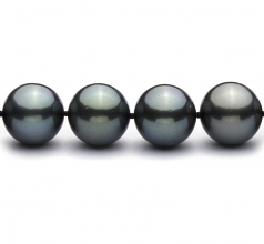 12-12.9mm AAA Quality Tahitian Cultured Pearl Necklace in 18'' Black